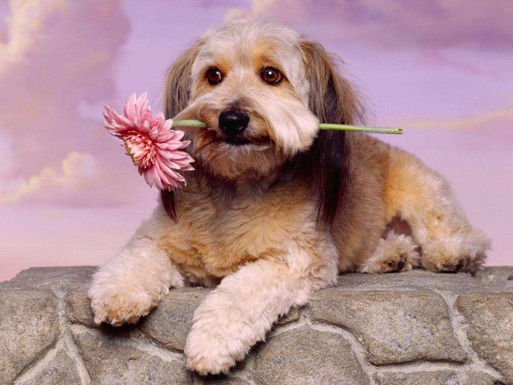 Kedvenc fotóink, háttérképeink - Page 4 Hatterkepek-kutyas_6